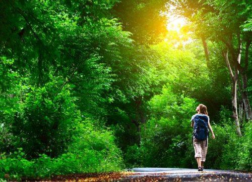 Reasons Why I Love Nature Martin Howe
